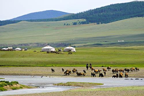mongol gazar