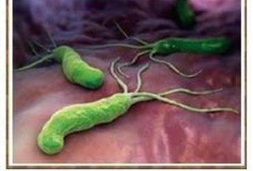 Хеликобактери нь аяга, халбага, гар нүүрийн алчуураар дамжин халдварладаг